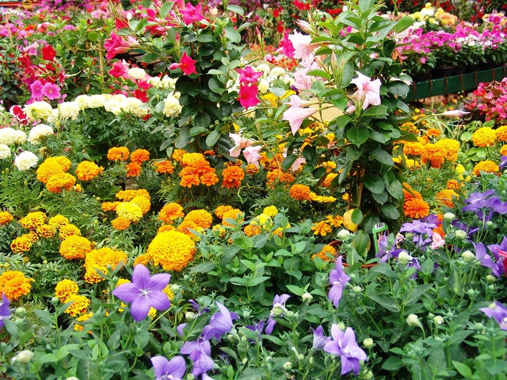 Nuestras plantas de temporada centro de jardineria el for Plantas temporada